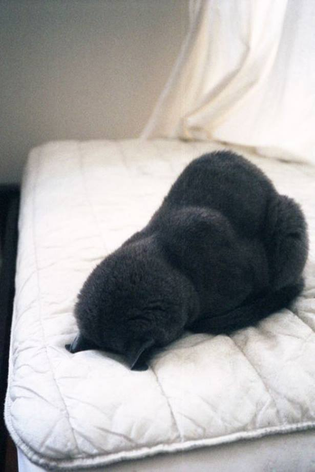 cute cats sleep like this tyle 04