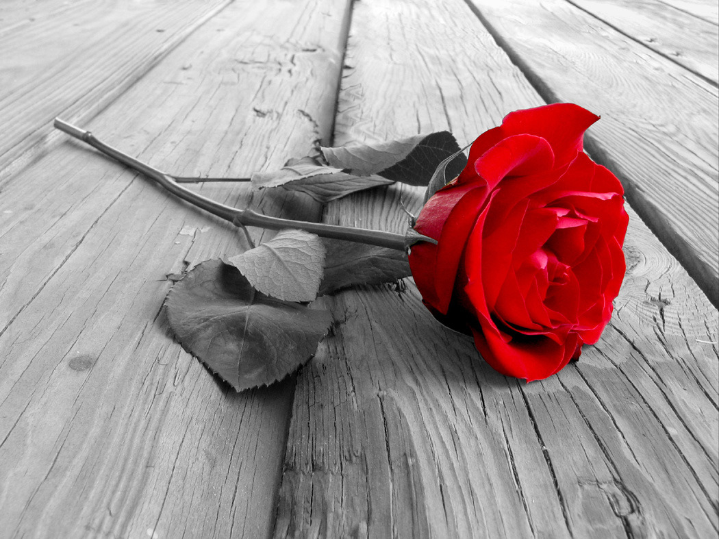 Falling-in-love-with-a-rose