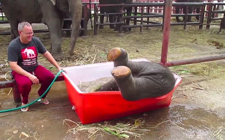 一頭小象跌進水裡,人們不幫忙還哈哈大笑?原來... 太可愛了!