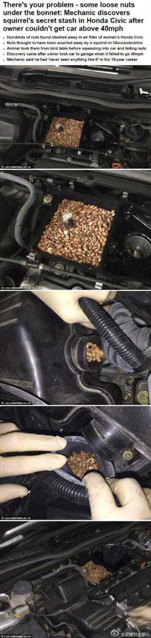可愛到爆!車子怎麼開也開不快!?一打開車廂…發現松鼠送的驚喜!!