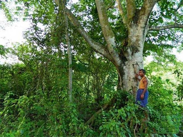 他花人生中的36年,造了一座原始森林養活整群老虎大象!