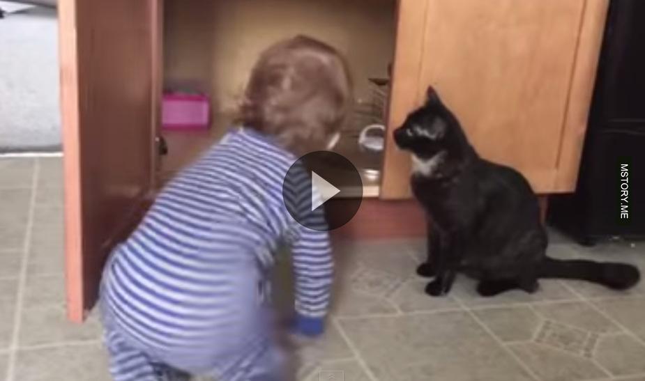 Cat is sick of that kid 01