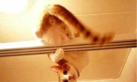喵喵為什麼喜歡偷看主人洗澡? 原來是 ...