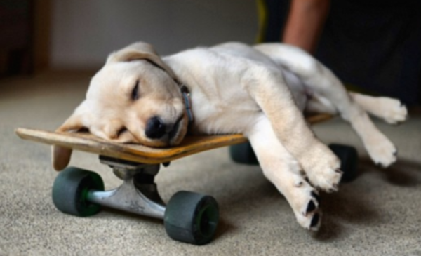 21張照片證明小狗狗只要睏了,你完全阻止不了他!