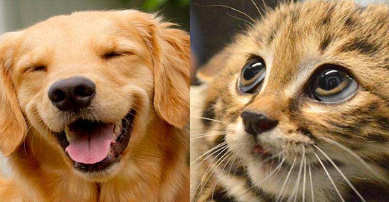 超中肯!!養貓跟養狗的區別,第五個真的太好笑了!!養貓的主人們你們辛苦了...