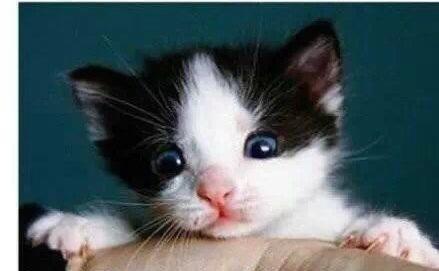 毛毛的傢伙? 看完你就知道我為什麼喜歡貓了!