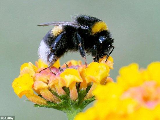 關於蜜蜂你絕對不知道的20個小趣聞