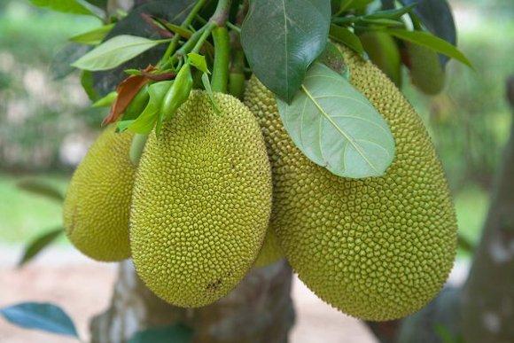 外表難看卻很美味的10種水果