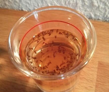 教你簡單自製糖衣炮彈一舉消滅廚房中的小果蠅