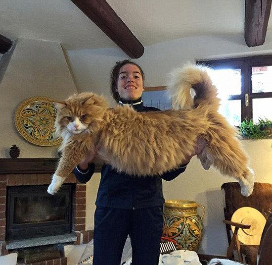 大貓來襲!網絡流行曬巨貓潮流