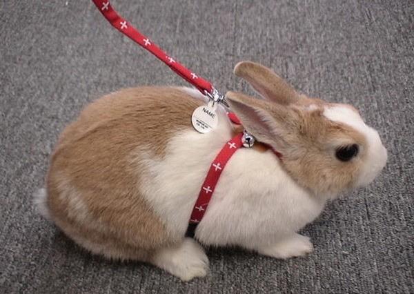 兔子的『嘿咻』姿勢把主人的尊嚴射得粉碎,到底誰教的!?