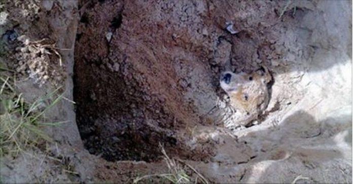 一只的流浪狗差点被人类活埋!残忍的行为让人咂舌...想不到他的结局竟然是...