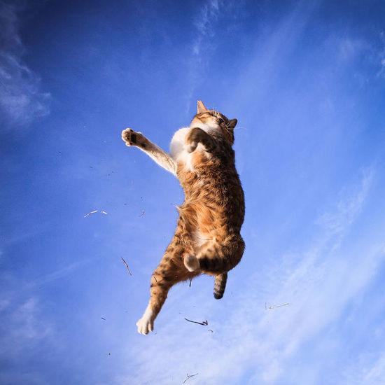 超帥的喵星人跳躍姿態,