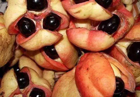 這10種水果可能致命:出門可千萬不要亂吃