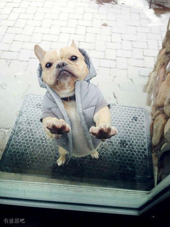 奴才快放我進去,不然有你好看!